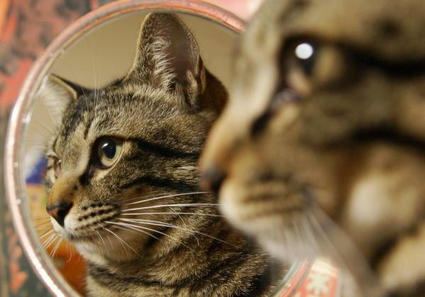 鏡を使った暗示